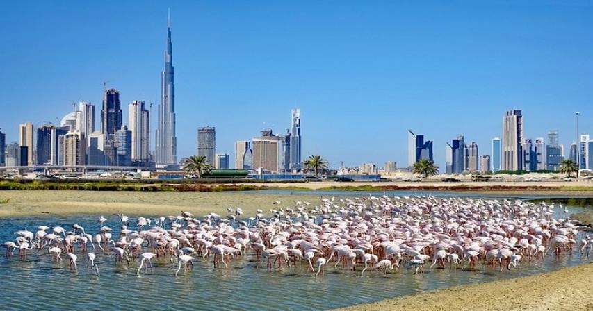 Ras Al Khor Wildlife Sanctuary   Things to do with Kids in Dubai